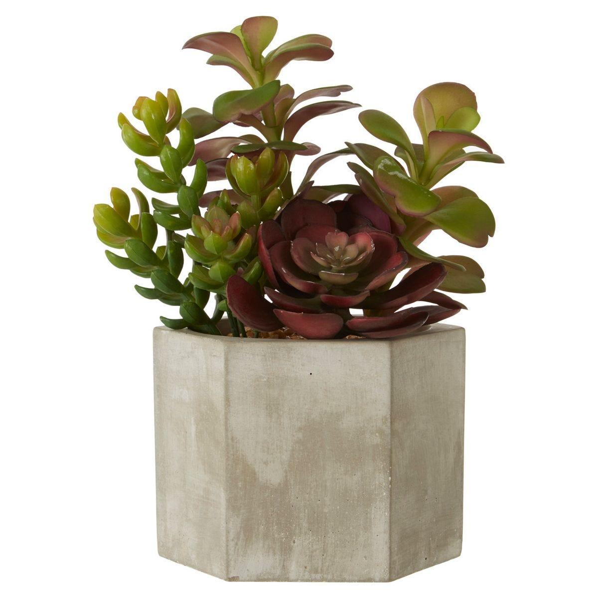 Mixed Succulent Ceramic Pot - Grey