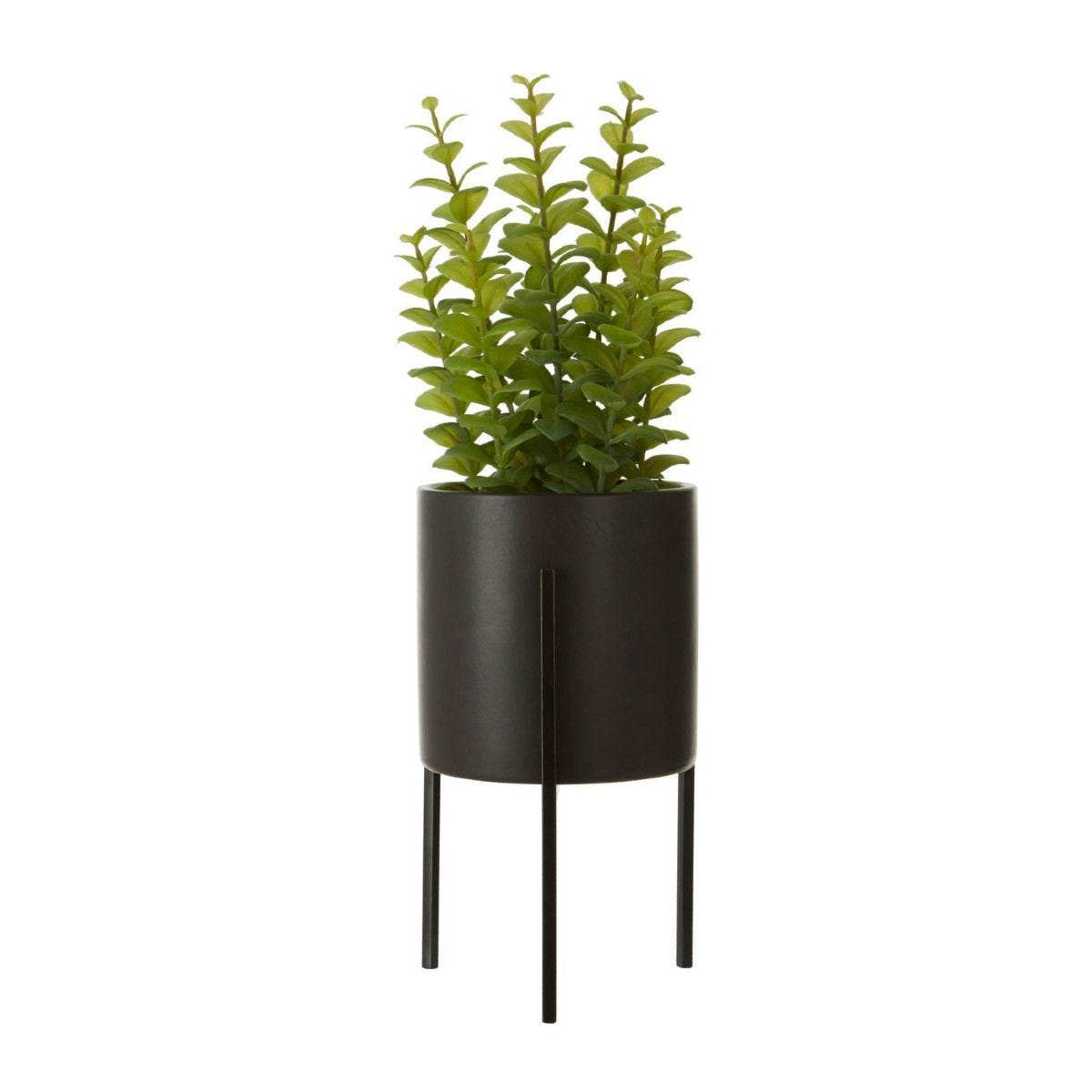 Thyme in Black Ceramic Pot with a Iron Stand