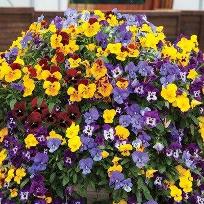 garden colour scheme