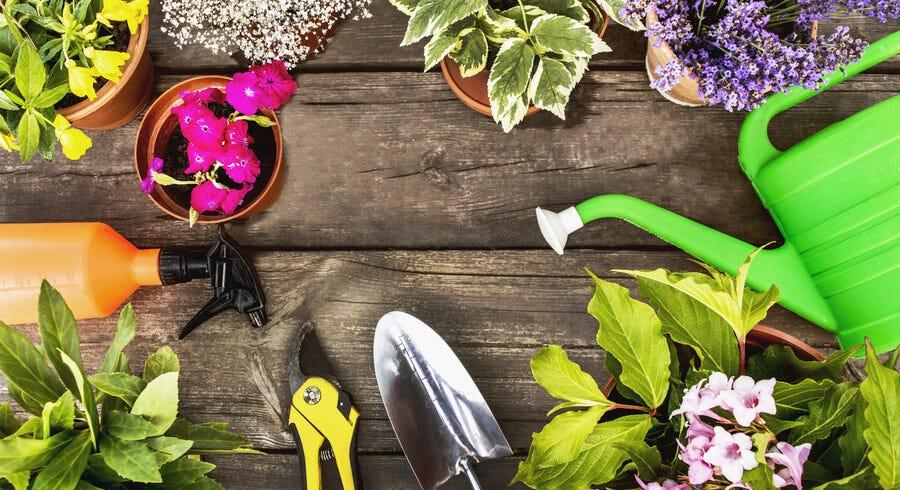 Style an Eco-friendly Garden