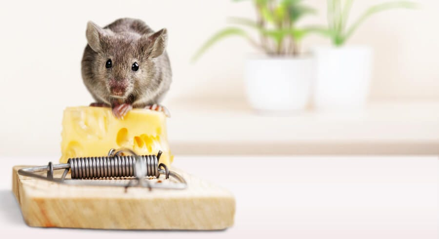 How to Get Rid of Mice and Rats - And Keep Them Away