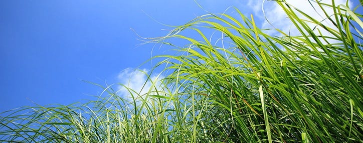 long grass encourage biodiversity