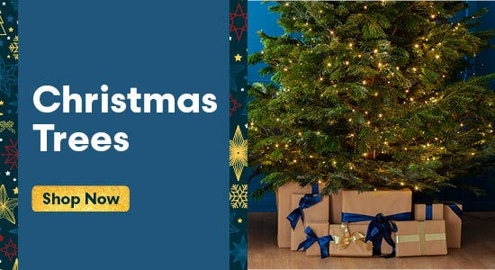 Shop Our Christmas Tree Range