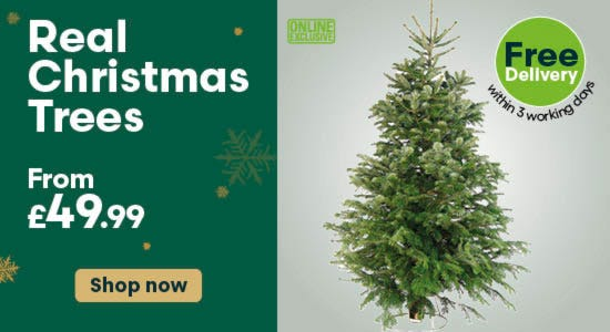 Shop real christmas trees with free delivery!