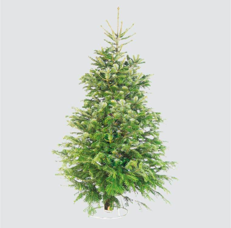 Christmas Shop - Real Christmas Trees