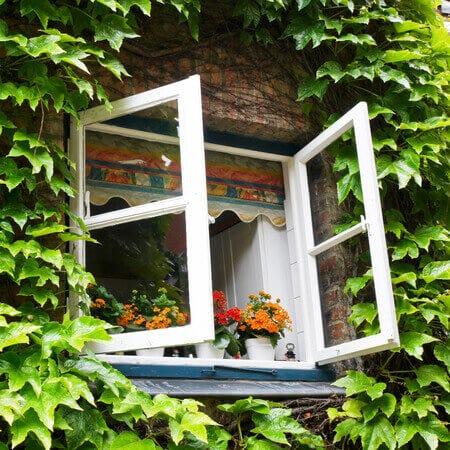 exterior plants spider season