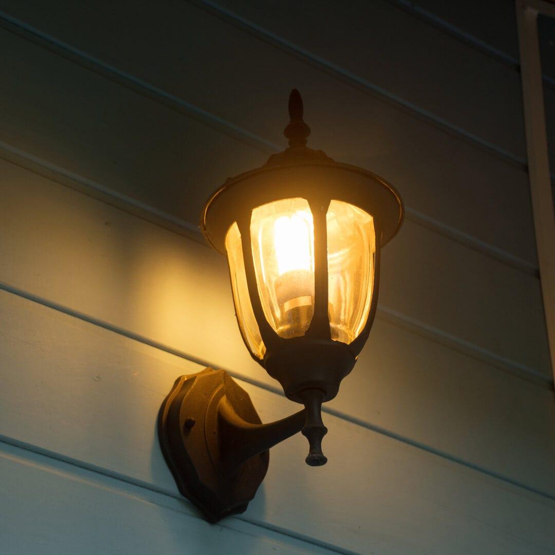 lights spider season